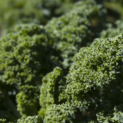 best fat burning foods   kale