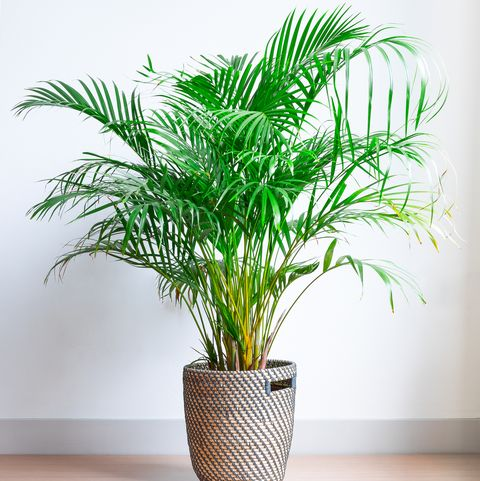 bright living room with houseplant on the floor in a wicker basket