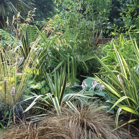 best perennials   ornamental grass