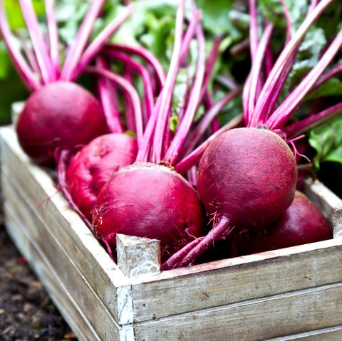freshly picked beetroots in wooden tray